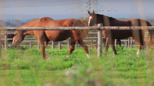 stockvideo's en b-roll-footage met crane pan: horses - vier dieren