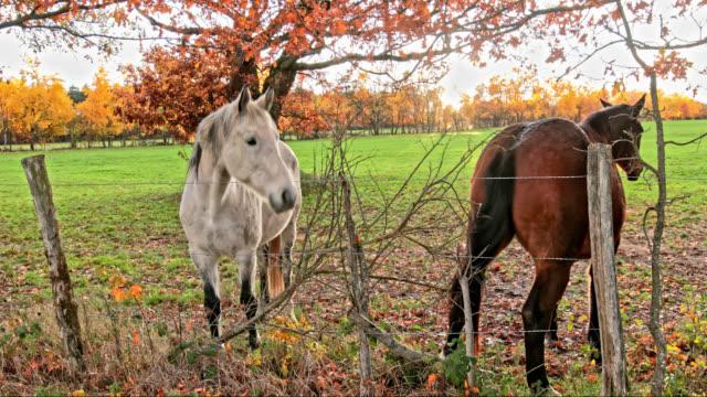 vidéos et rushes de horses - vincent pommeyrol