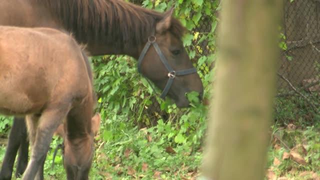 vídeos y material grabado en eventos de stock de horses - brida arnés