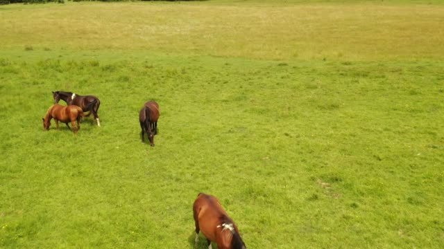 horses - pasture stock videos & royalty-free footage