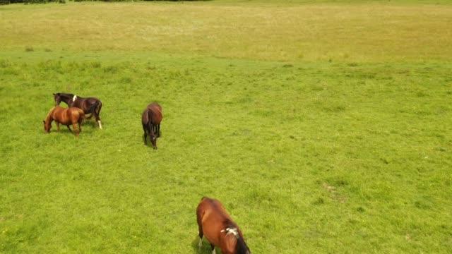 馬 - 放牧地点の映像素材/bロール