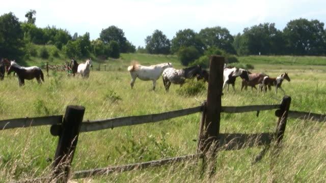 馬 - 動物の色点の映像素材/bロール