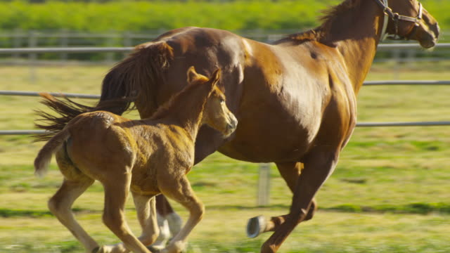 horses - animal family stock videos & royalty-free footage