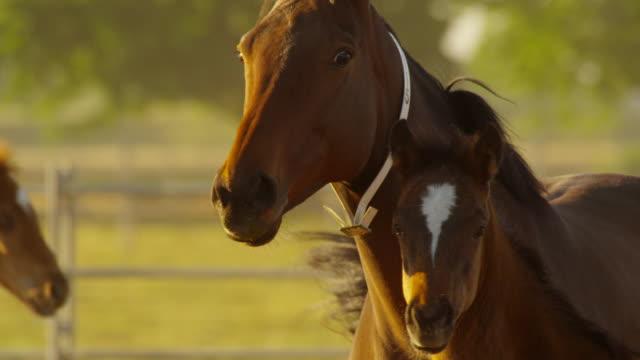 horses - kleine gruppe von tieren stock-videos und b-roll-filmmaterial