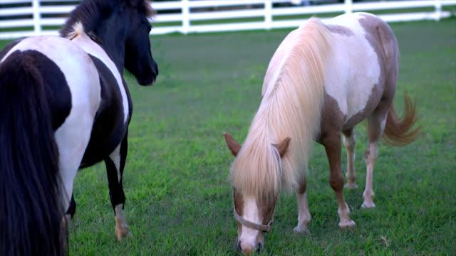 horses - animal markings stock videos & royalty-free footage