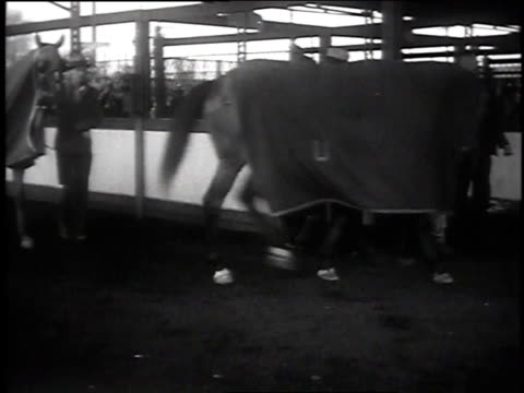 horses walking in line with blankets on back in churchill downs paddock / crowd standing in lines at betting windows / horses marching onto field - 1935 stock videos & royalty-free footage
