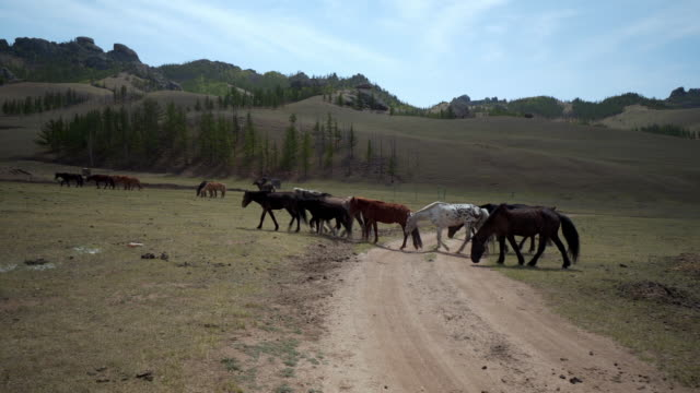 horses walking on field with dirt road against mountains - ulaanbaatar, mongolia - 牧夫点の映像素材/bロール