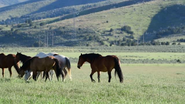 horses walking outside in a field on a spring day in utah - utah stock videos & royalty-free footage