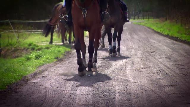 horses walking - animal markings stock videos & royalty-free footage