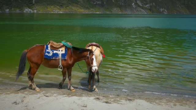 horses watering at lake in quilotoa, ecuador - recreational horse riding stock videos & royalty-free footage