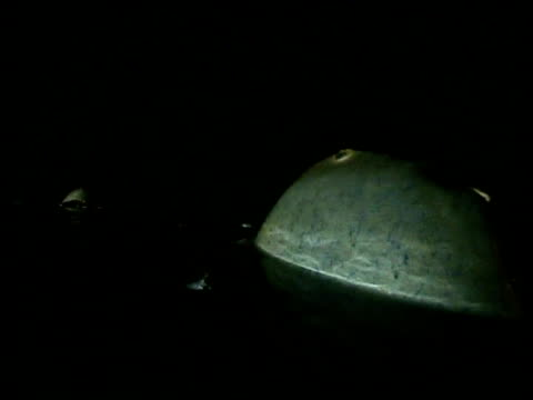 horseshoe crab returns to sea after spawning - spawning stock videos and b-roll footage