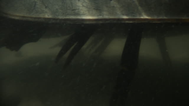 horseshoe crab scuttles across seabed, delaware, usa - claw stock videos & royalty-free footage