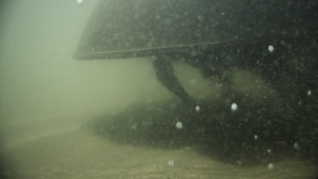 horseshoe crab scuttles across seabed, delaware, usa - crab stock videos & royalty-free footage