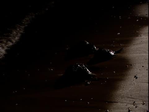 horseshoe crabs on beach at night - stil der 2000er jahre stock-videos und b-roll-filmmaterial
