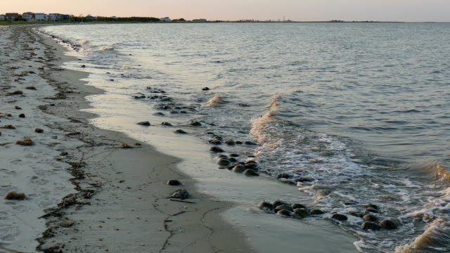 Horseshoe crabs spawn sunset Slaughter Beach Delaware Bay homes