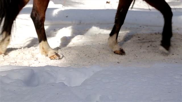 Hufeisen auf dem Schnee, Nahaufnahme