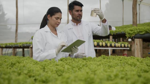 orticoltore che preleva campioni d'acqua in un raccolto idroponico di lattuga parlando mentre la donna prende appunti su tavoletta - america del sud video stock e b–roll