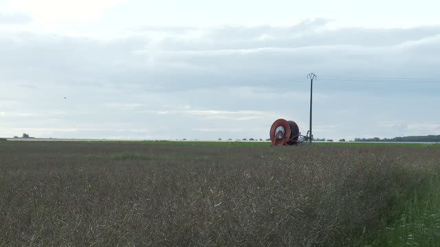 ws hose reel in withered rapeseed field / reims, champagne, france - ヌヴェール点の映像素材/bロール