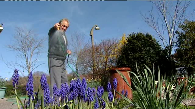 hosepipe ban comes into force in the south east t01041205 swindon low angle shot of blue grape hyacinth flowers being watered with hose shots of... - ヒヤシンス点の映像素材/bロール