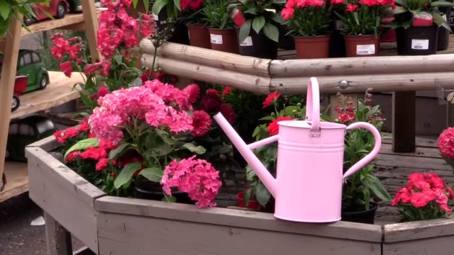 hosepipe ban in northern ireland has prompted an unprecedented rush on another gardener's friend, the watering can. - water conservation stock videos & royalty-free footage
