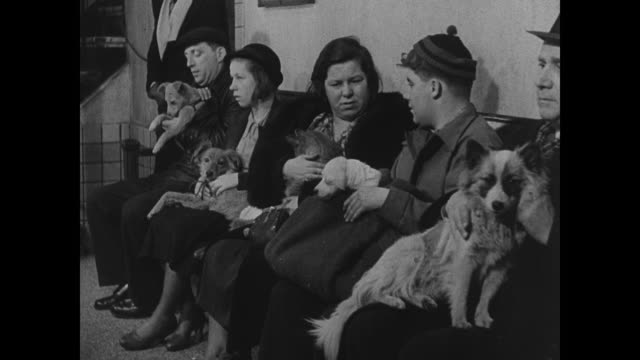 stockvideo's en b-roll-footage met aspca hospital people waiting w/ mixedbreed dogs at free clinic cu small dog w/ wet eyes int veterinary hospital or vet giving dog anesthesia vet... - 1937