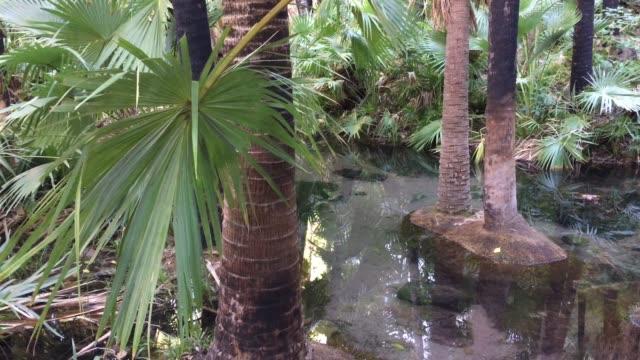 hot water spring in kimberley region western australia - natürliches thermalbecken stock-videos und b-roll-filmmaterial
