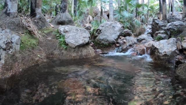 hot water spring in kimberly region western australia - natürliches thermalbecken stock-videos und b-roll-filmmaterial