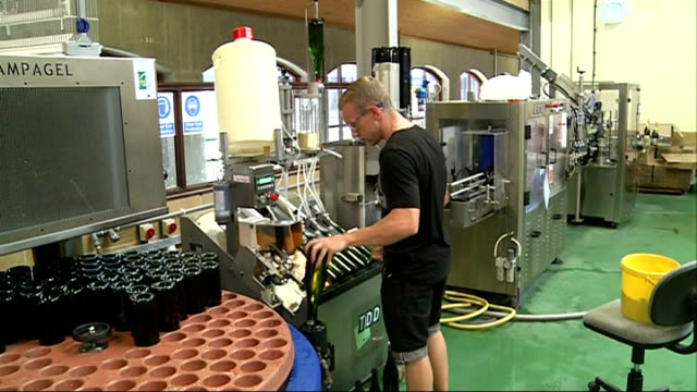 hot weather boosting english wine industry england surrey dorking denbies wine estate ext various of chris white in vineyard vine growing over wire... - grape leaf stock videos and b-roll footage