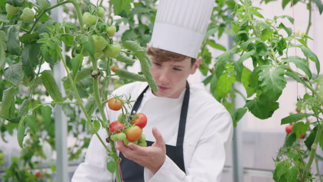 hotel chef at looking at tomatoes in organic garden - chef's hat stock videos & royalty-free footage