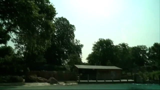 hottest day of the year so far / health warning london zoo gvs penguin beside water in enclosure - enclosure stock videos & royalty-free footage
