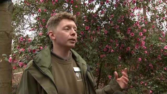 hottestever february day may be recorded this weekend england surrey rhs garden wisley ext reporter to camera sot peter jones interview sot reporter... - richard pallot stock-videos und b-roll-filmmaterial
