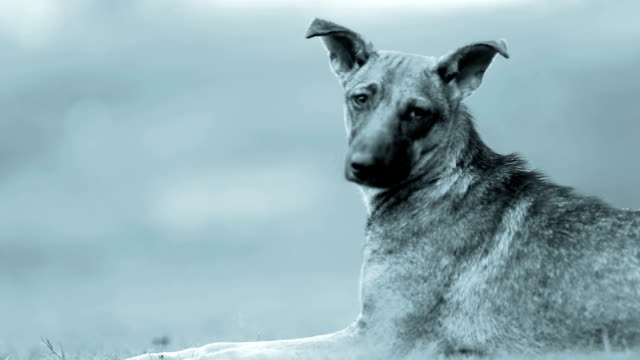 hound dog - hound stock videos & royalty-free footage