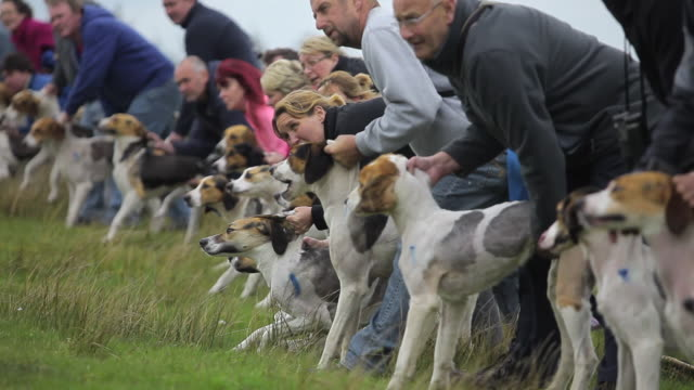 hound trailing - large group of animals stock videos & royalty-free footage