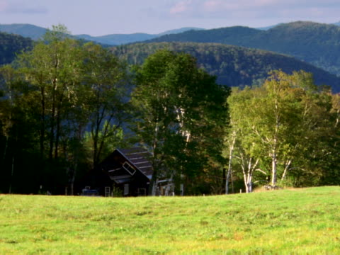 house and trees beyond pasture - artbeats stock videos & royalty-free footage