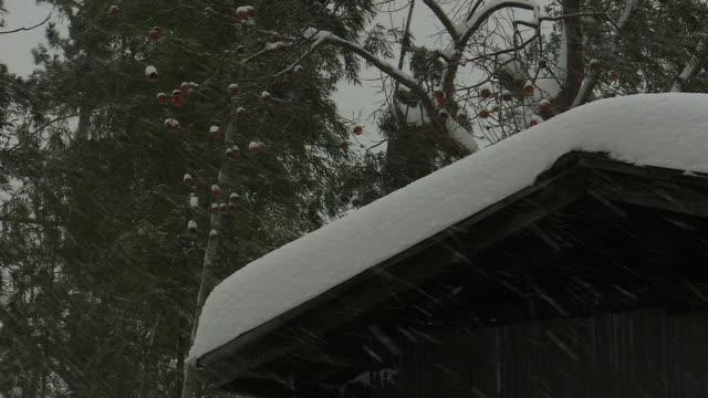 house and trees in snowstorm, akita, japan - 秋田県点の映像素材/bロール