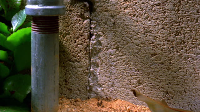 house ants climb up a foundation and into a crack. available in hd. - cracked stock videos & royalty-free footage