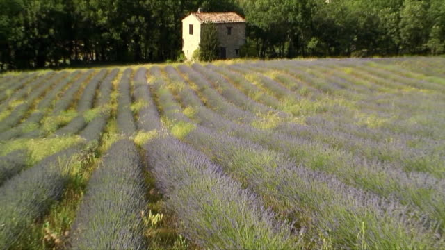 cu zo ws house by lavender field, alpes-de-haute-provence, france - provence alpes cote d'azur stock videos & royalty-free footage
