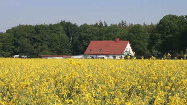 House in a rape field