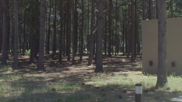 stockvideo's en b-roll-footage met house in wooded area - naaldbos
