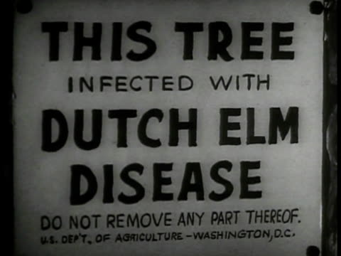 house on street trees cu sign 'this tree infected w/ dutch elm disease' ws street w/ line of elm trees ws inspector looking at tree ws men cutting... - diseased plant stock videos and b-roll footage