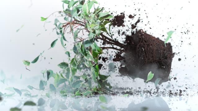 SLO MO house plant falling on flat surface