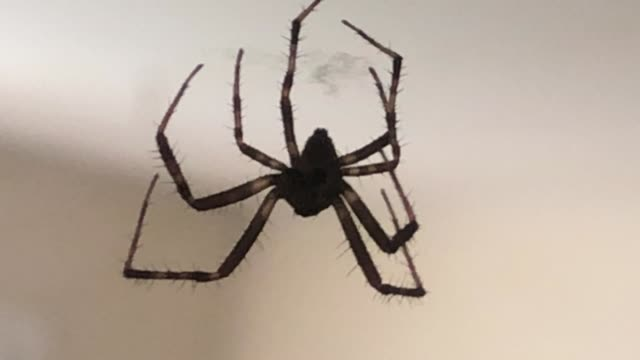 house spider dangling from spider web - house spider stock videos & royalty-free footage