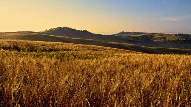 ds house circondato da campi di grano - campo video stock e b–roll