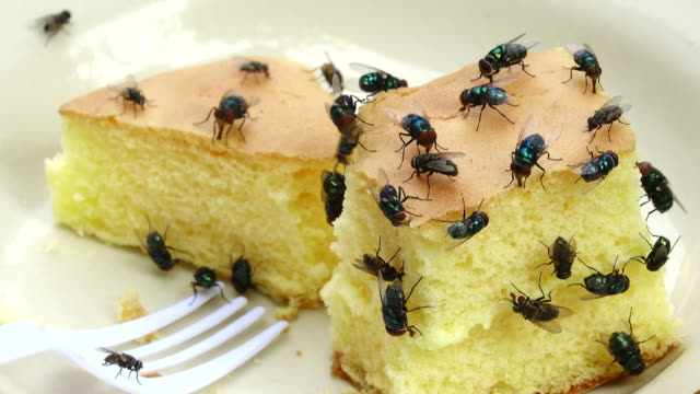 housefly eating cake - housefly stock videos & royalty-free footage