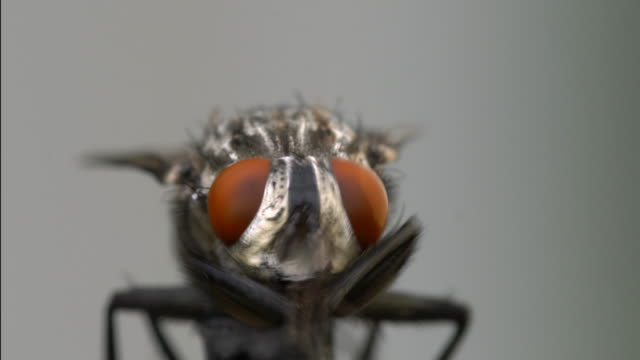housefly is moving head and legs, macro shot - animal eye stock videos & royalty-free footage