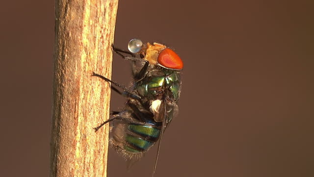 vídeos de stock e filmes b-roll de housefly on a branch - inseto