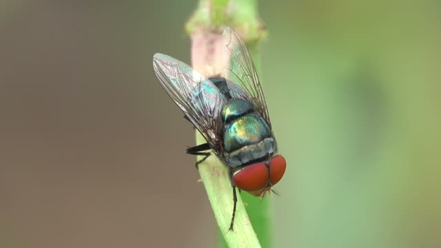 housefly on a branch - housefly stock videos & royalty-free footage