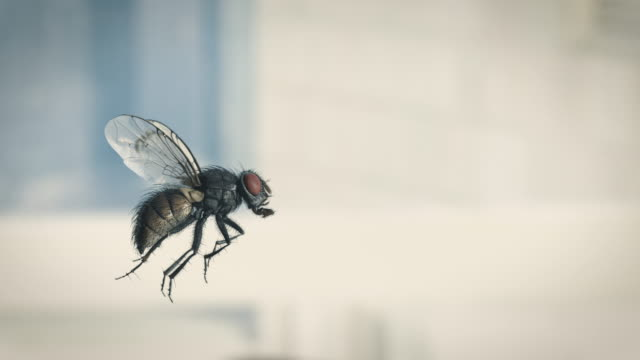 vídeos de stock e filmes b-roll de housefly slow motion flying - inseto