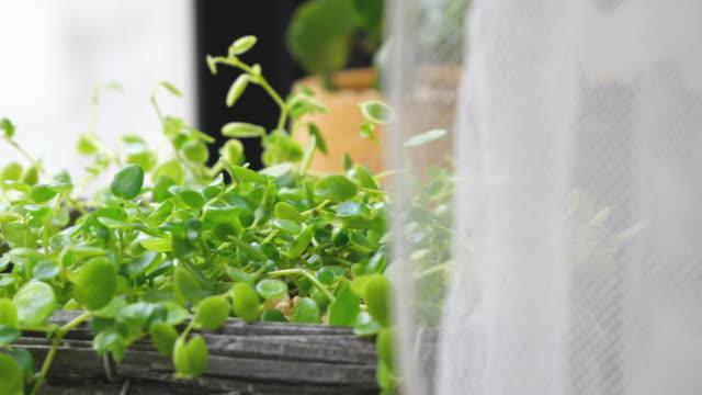 窓辺に置かれた観葉植物。 - 観葉植物点の映像素材/bロール