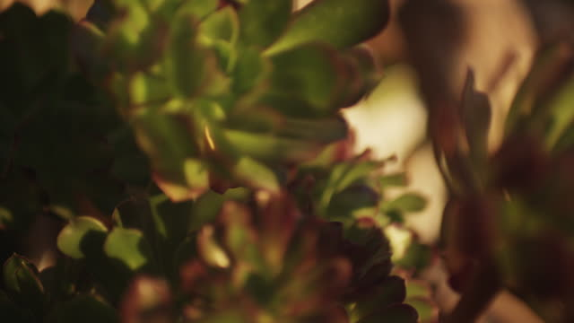 vídeos de stock, filmes e b-roll de houseplants at sunset, close up - planta de interior